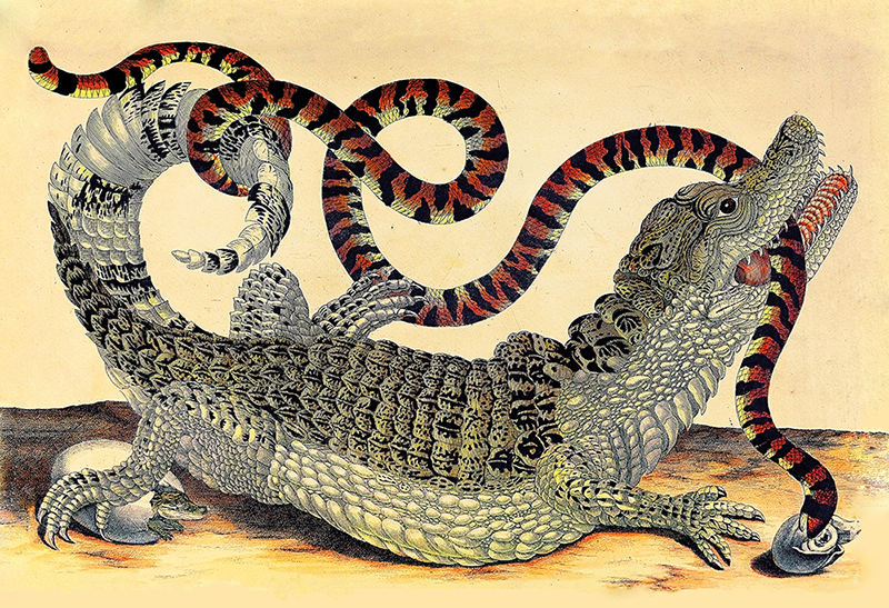 Off the Page: An Exhibition of Original Works of Maria Sibylla Merian Re-imagined as Sculpture