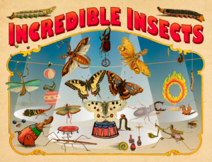 Depiction of avariety of insects performing a circus